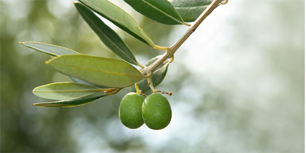 olive - Cucina di Sicilia